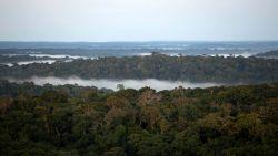Brazilië stelt nieuw plan voor regenwoudfonds voor
