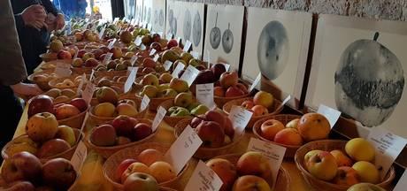Appels met peren vergelijken tijdens de Dag van het Fruit in Liempde