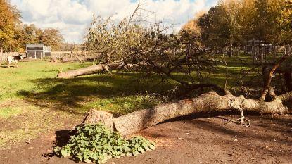 """""""Truiense Hoogstamboomgaarden dreigen te verdwijnen"""""""