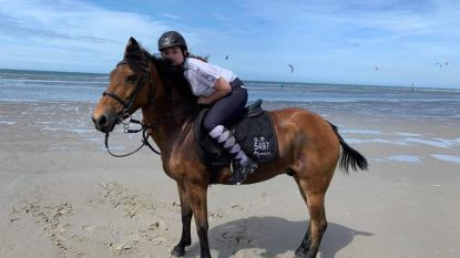 Pony nog steeds spoorloos in natuurreservaat ondanks dagenlange zoektocht
