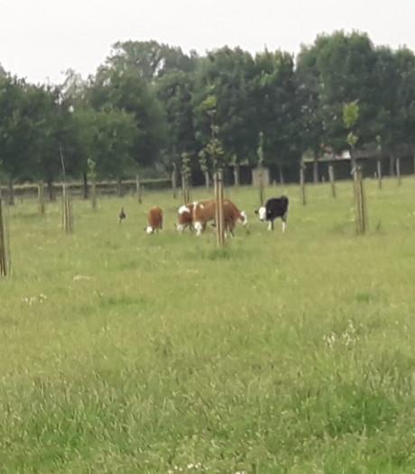 De ideale band tussen landbouw, bos en voedsel