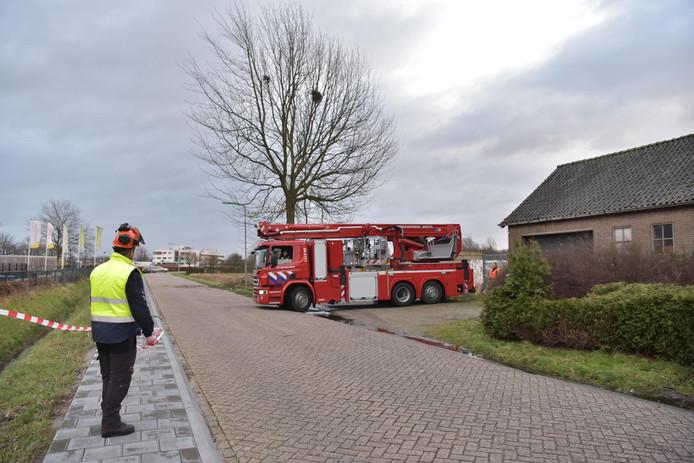 Boom staat op omvallen bij Prinsentuin College aan de Frankenthalerstraat in Breda.