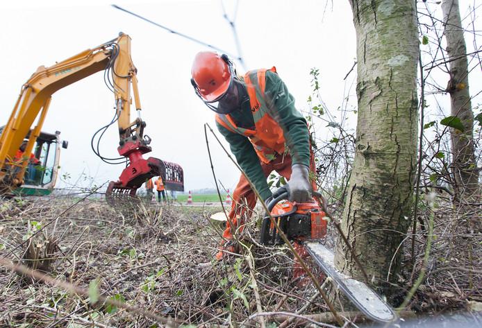 In Bodegraven-Reeuwijk verdwijnen meer bomen dan dat er bijkomen.