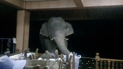 Hongerige olifant steelt voedsel en waterflessen