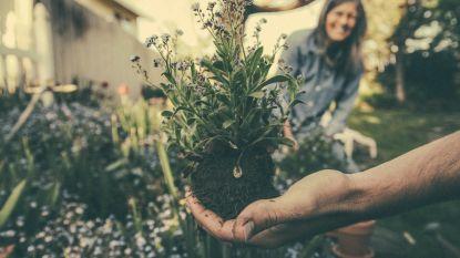 Met deze 7 tips gaat onze tuinjournaliste de strijd aan met de droogte
