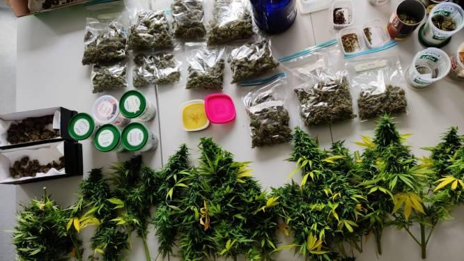 Politie rolt cannabisplantage op: Verdachte (62) opgepakt