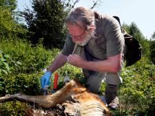 Aangereden wild zorgt voor nieuw leven in de Biesbosch: 'Heel wat dieren profiteren'