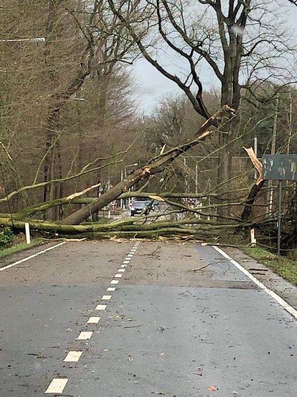 Op de Putsesteenweg in Kalmthout versperde een boom de rijbaan.