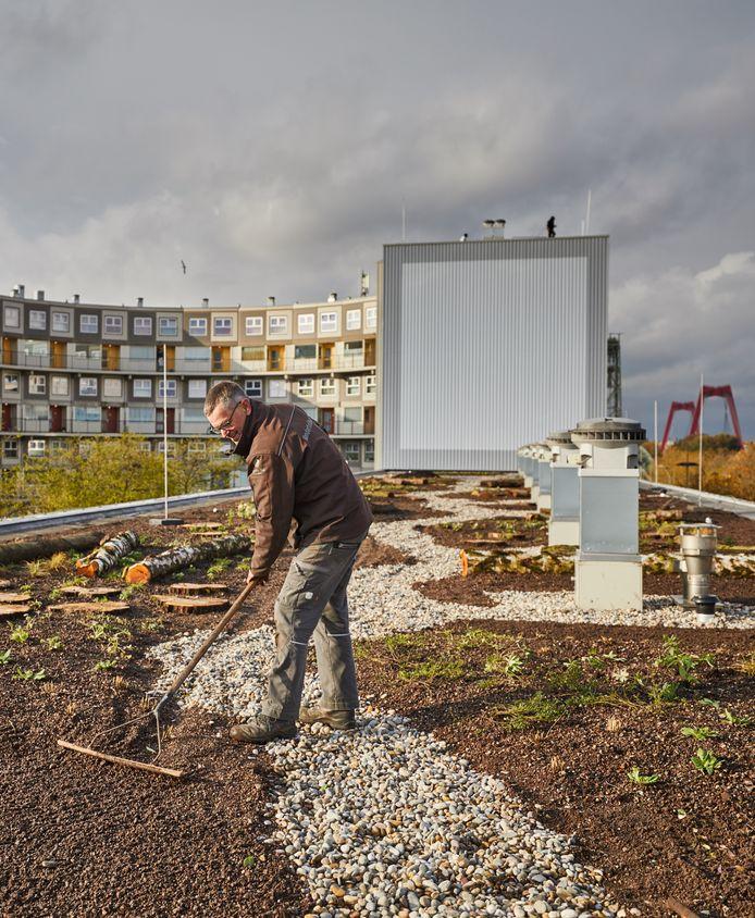 Het werk aan de enorme daktuin duurt nog zeker tot maart.
