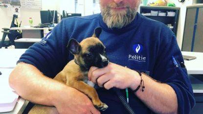Antwerpse politie vindt verloren puppy en adopteert die uiteindelijk zelf