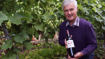 """Gust Bertels (Het Eikenvat) maakt al 40 jaar wijn: """"Ik ben één van de goedkoopste wijnboeren van België"""""""