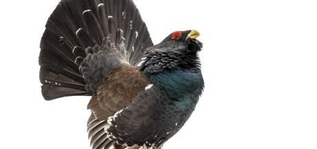 Dronken feestvierders doden zeldzame vogel na Duits dorpsfeest, geldboetes tot 1300 euro