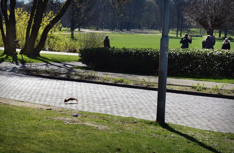 Het is  rustig in het Nijmeegse Goffertpark nu velen het advies opvolgen binnen te blijven. Een cameraploeg interviewt een wandelaar. Een eekhoorn steekt de weg over. Beeld Marcel van den Bergh / de Volkskrant