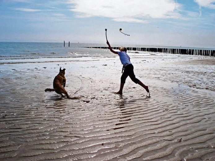 De gemeente Vlissingen tobt over genoeg speelruimte voor honden nu de stranden de helft van het jaar verboden gebied zijn voor honden.
