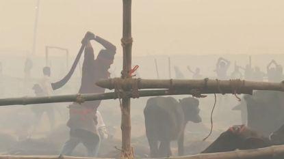 Schokkende beelden: duizenden dieren gruwelijk gedood bij grootste rituele slachting ter wereld