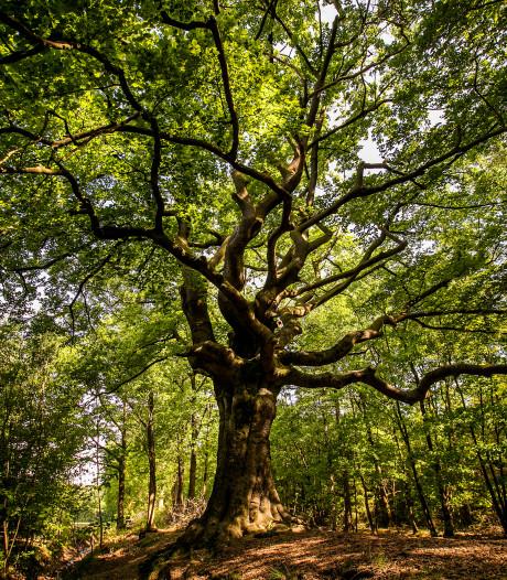 Spanning rond Heksenboom in Bladel loopt op