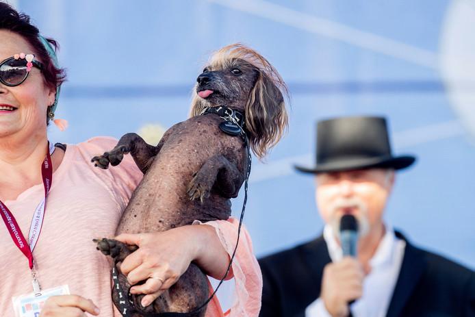Himisaboo, ook wel Trump Dog genoemd.