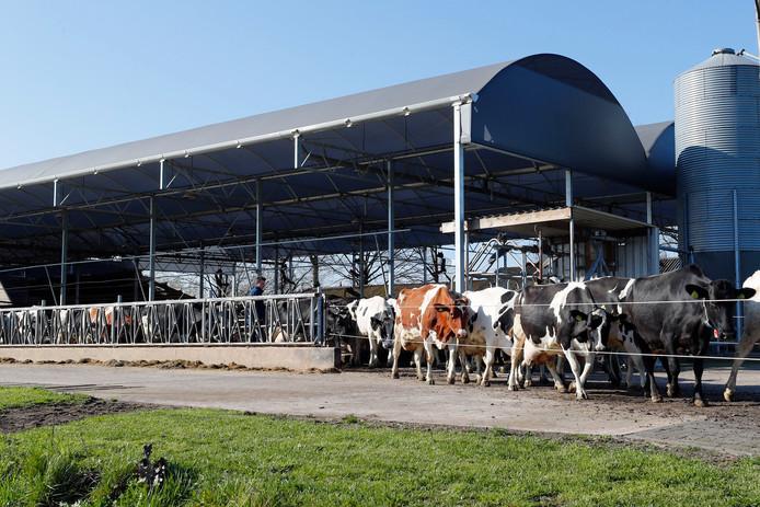 Volgens VVD-Kamerlid Mark Harbers hoeft er geen koe of varken minder in Nederland te zijn, terwijl D66-Kamerlid Tjeerd de Groot de veestapel wil halveren.