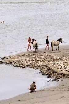Nijmeegse strandjes verboden voor paarden in de zomer?