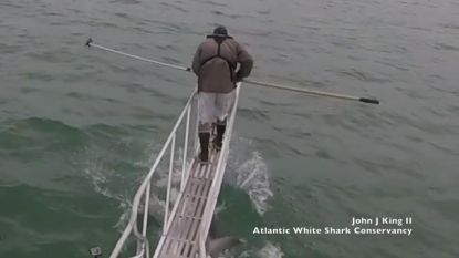 Witte haai springt naar man op boot