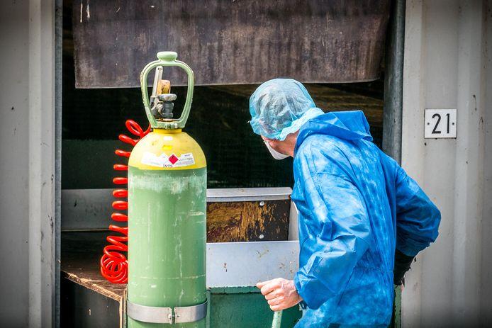 Medewerkers van de NVWA aan het werk tijdens een ruiming van nertsen op een nertsenfokkerij in het Brabantse Vlierden. Foto ter illustratie.