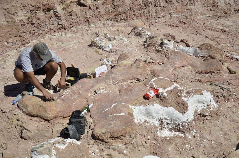 Onderzoekers wisten ongeveer 150 botten op te graven van zeven dinosaurussen. Geen van de skeletten is compleet.