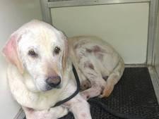 Verwaarloosde hond gevangen in Eibergen, baasje spoorloos