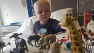 Leukemiepatiëntje Felix is peter van olifantje in Pairi Daiza (en prinses Stéphanie van Monaco is meter)