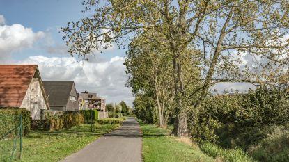 """""""Veldesdoorns zijn een gevaar en moeten verwijderd worden"""": raadslid trekt van leer tegen zieke bomen"""