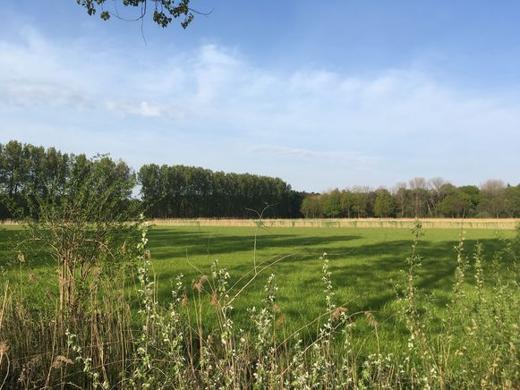 Het Heldenbos wordt een onderdeel van het Wullebos in Moerbeke, maar de initiatiefnemers zoeken nu ook extra locaties door het overweldigend succes.