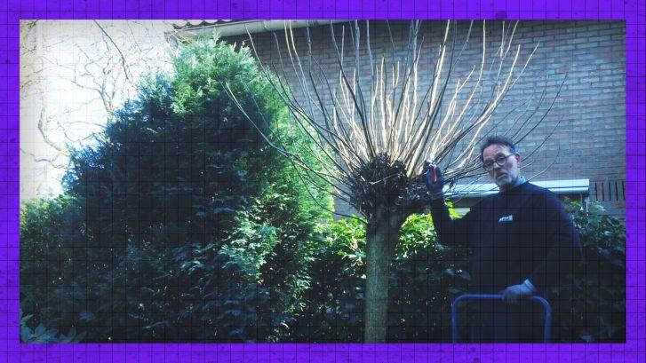 Heb je een 'trompetboom' in de tuin? Zo kun je 'm optimaal verzorgen