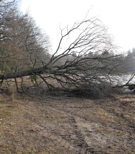Weer bomen om in bos Herperduin, paden worden geblokkeerd