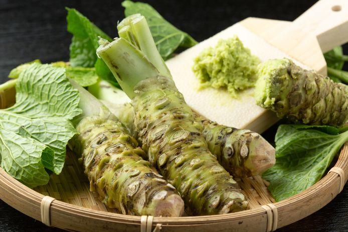 De Japanse wortel waarvan wasabi vaak wordt gemaakt.