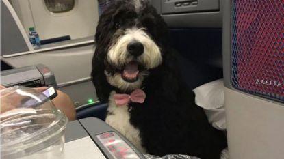 Hond met strikje op vliegtuig zorgt voor beroering op Twitter