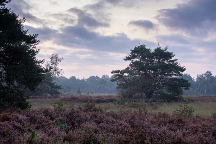 Heide in natuurgebied Pannenhoef