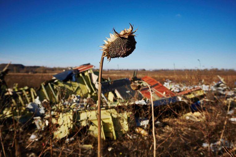 Uitgedroogde zonnebloemen in het rampgebied in het Oosten van Oekraïne. Beeld anp