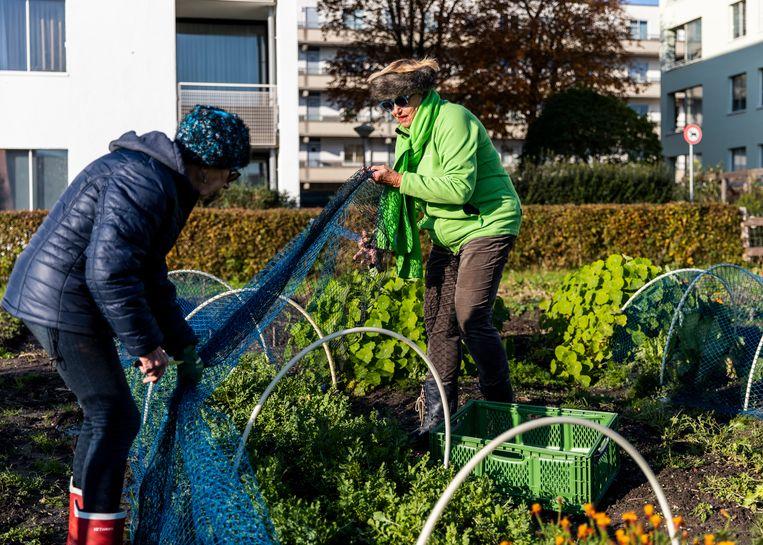 Louise van Delden: 'De grond is tegenwoordig nooit meer zo bevroren dat je niet kunt werken.' Beeld Lin Woldendorp