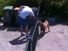 Gespierde dierenvriend blijkt inbreker in Tilburg: iPads, autosleutel en laptoptas gestolen