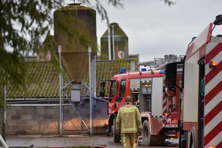 Brand in een varkenshouderij in Adinkerke. Vijf varkens sterven.