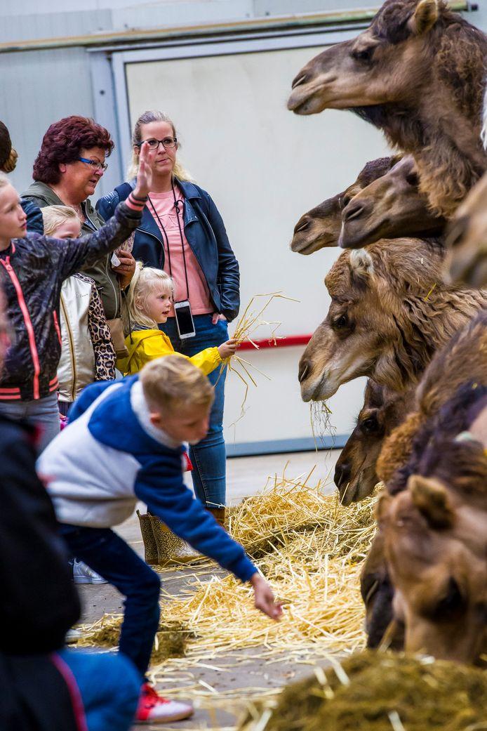 Bezoekers kregen vrijdag een rondleiding door de kamelenboerderij van Smits in Berlicum.