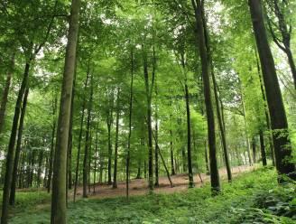 """Geen nieuw bos voor Horebeke: """"Er zijn geen gronden beschikbaar"""""""