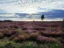 Droogt Twente helemaal op? Niet met de Sallandse Heuvelrug als eeuwige waterbron