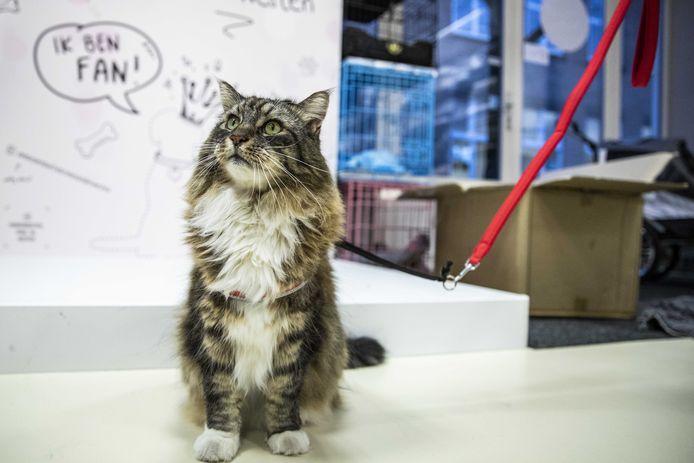 Foto van een kat ter illustratie.