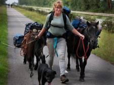 Twee weken aan de wandel met twee pony's en twee honden