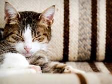Op deze plekken in Rotterdam kunnen katten nog de hele maand gratis worden gechipt