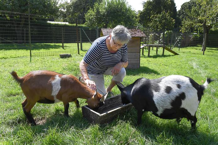 Theo Goossens met haar huidige geiten.