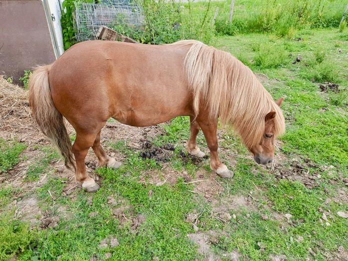 Een pony in de gemeente Neder-Betuwe is uit zijn lijden verlost vanwege ontstekingen in zijn hoeven.