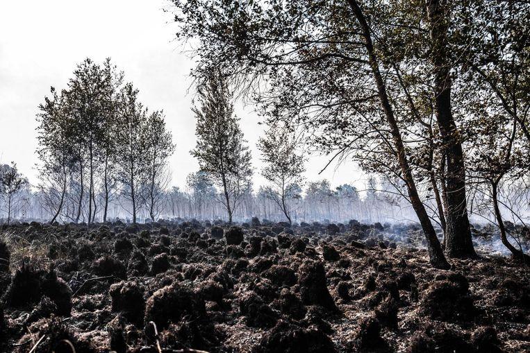 In de Deurnese Mariapeel in Noord-Brabant is een natuurgebied van 21 hectare gisteren door brand beschadigd Beeld Rob Engelaar/ANP
