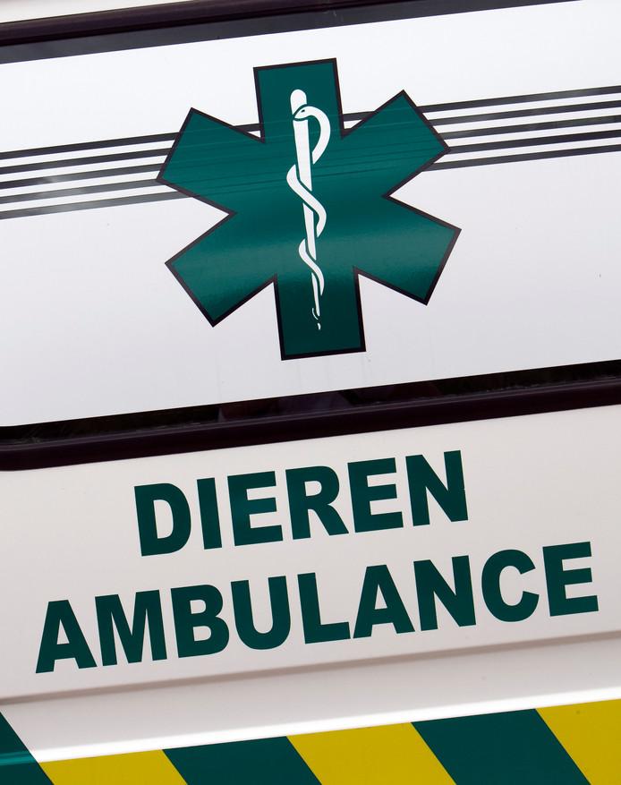 Medewerkers van de Dierenambulance troffen een dode kat aan, met een stoeptegel om de nek.