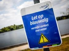 Blauwalg aangetroffen op meerdere plekken in Beuningen